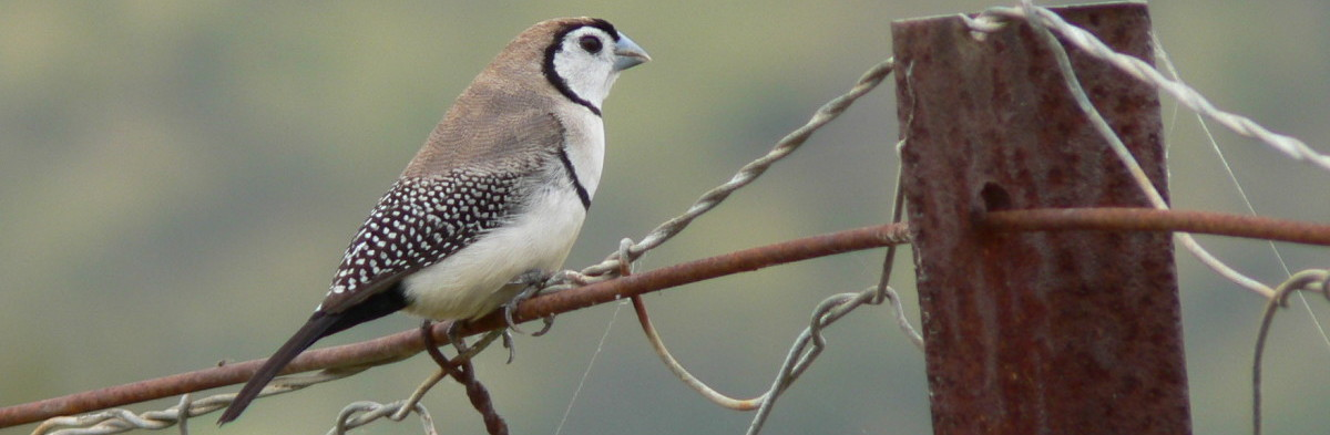 The Bird Surveyors